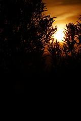 P1190172 (harryboschlondon) Tags: harryboschflickr harrybosch harryboschphotography harryboschlondon fuengirolajanuary2020 fuengirola 2020 spain costadelsol andalusia espana sunset