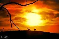 Sunset Over Deer Ridge (franklin331) Tags: aspect backcountry bliss blissdinosaurranch blissphotographics blissranch border borderlands branch buck clouds frankbliss franklinebliss image land landscape landscapeladder layers mondayblues mondayfunday mondaymotivation montana motivationmonday mule photo ranchlands ridge scenery scenic sky skyshow sonyalpha sun sunset wyoming
