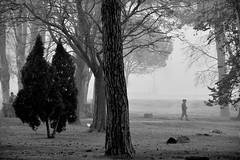 Walking in the fog (jaume zamorano) Tags: blackandwhite blancoynegro blackwhite blackandwhitephotography blackandwhitephoto boira bw brouillard catalunya d5500 fog foggy gente lleida monochrome monocromo mist noiretblanc nikonistas niebla pov people street streetphotography streetphoto streetphotoblackandwhite streetphotograph view