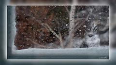 3 Lookinginn (andantheandanthe) Tags: creative creativity closeup close up macro trix photoshop adobe kreativ kreativitet närbild makro kreativer herauf makrotix créativité créative gros plan fine creativa del primo piano di creatività sulla creatividad primer plano fönster kanada gäss snö regn björk window canada geese snow rain birch fenster gänse schnee regen birke fenêtre bernaches du neige pluie bouleau betulla della pioggia neve delle oche finestra ventana canadá gansos nieve lluvia abedul