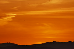 P1190192 (harryboschlondon) Tags: harryboschflickr harrybosch harryboschphotography harryboschlondon fuengirolajanuary2020 fuengirola 2020 spain costadelsol andalusia espana sunset