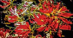 20-01-18 still nah blü rot text  dsc_0057 (ulrich kracke (thanks for more than 2 Mill vi) Tags: hh blüterot c6 kontrast lowkey nah pulsmalte s3 stillleben textur