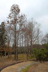 Trees in winter (Greg Peterson in Japan) Tags: 近江富士花緑公園 plants 木 trees shiga yasu 植物 japan 滋賀県 野洲市 shigaprefecture