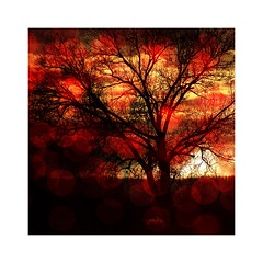 Tree (b_kohnert) Tags: clouds sky outdoor trees plants nature painting digitalpainting digiart