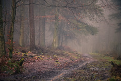 Into the Mist (vincocamm) Tags: cumbria eden edenvalley woods trees forest mist misty moody mystical january 2020 track muddy rocks sandstone nikon d7500 beaconwoods