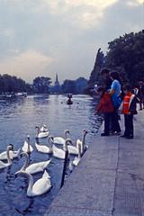 Stratford: Feeding the Swans (AntyDiluvian) Tags: england uk unitedkingdom vintage 1973 1970s stratford stratforduponavon river riveravon avonriver shakespeare swans riverbank