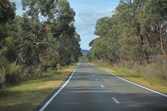 On the road to the Grampians (iorus and bela) Tags: grampians victoria australia australie camping roadtrip iorus bela 2019 december kangaroo emoe trees