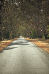 Lovely trees (iorus and bela) Tags: camping december australia roadtrip grampians victoria kangaroo bela australie 2019 emoe iorus trees