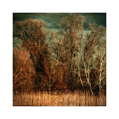 Reed and Trees (b_kohnert) Tags: outdoor clouds sky reed trees landscape nature painting digitalpainting digitalart