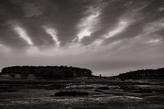 Bradgate Park, Leicestershire (raymorgan4) Tags: leicester leicestershire landscape england countryside rural blackandwhite monochrome clouds high moody dark trees copse fujifilm xt2 1680mm