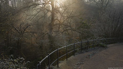 Blaise in winter (zolaczakl) Tags: bristol blaisecastleestate blaisecastleestatebristol frosty pathway woodland trees 2020 nikond800 nikonafsnikkor24120mmf4gedvrlens fence january photographybyjeremyfennell jeremyfennellphotography england uk