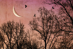 Crescent moon at sunrise. (jeanne.marie.) Tags: crescentmoon waningcrescent sunrise colorful birdsilhouettes silhouettes treescape trees myhomesky textured warm pink orange starlings moon 100xthe2020edition 100x2020 image8100