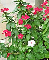 Varnville Flowers 1