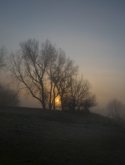 The trees on the hill (Through Bri`s Lens) Tags: sussex worthing brooklandslake sunrise trees mist misty sun frost brianspicer canon5dmk3 canon24105f4l