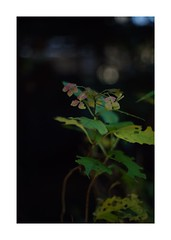 This work is 2/18 works taken on 2019/12/27 (shin ikegami) Tags: sony ilce7m2 a7ii sonycamera 50mm lomography lomoartlens newjupiter3 tokyo 単焦点 iso800 ndfilter light shadow 自然 nature naturephotography 玉ボケ bokeh depthoffield art artphotography japan earth asia portrait portraitphotography