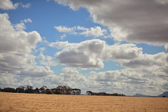 Clouds opening up (iorus and bela) Tags: grampians victoria australia australie camping roadtrip iorus bela 2019 december kangaroo emoe trees