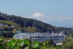 Mount Fuji - view from Engakuji Temple, Kamakura (SomePhotosTakenByMe) Tags: mount fuji berg mountain gebäude building volcano vulkan kamakura stadt city outdoor japan engakuji temple tempel