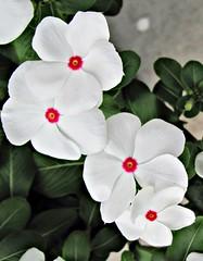 Varnville Flowers 2