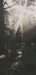 peaceful light (BedBrochFlick) Tags: graveyard graves sunlight sunshine mmxx 2020 england bedford uk cemetery