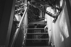 猫 (fumi*23) Tags: ilce7rm3 a7r3 animal alley stairway sony sel24f14gm 24mm fe24mmf14gm monochrome apsccrop cat chat gato neko ねこ 猫 ソニー モノクロ bw blackandwhite bnw