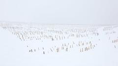 Wintery Field (Bernd Walz) Tags: fieldscape field void space vastness minimalistic minimalism landscape rural countryside fineart transformedlandscape artificiallandscape manufacturedlandscape agriculture newtopographics