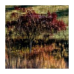 Reflets (Jean-Louis DUMAS) Tags: reflets reflections lac water etang eau abstract abstraction square carré art artistic artistique artiste artist nature naturel