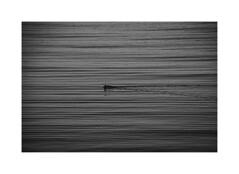 Lines (50/365) (Reckless Times) Tags: coot bird nature blackwhite blackandwhite black white lines mono border oxfordshire farmoor wildlife nikon d750 365 project