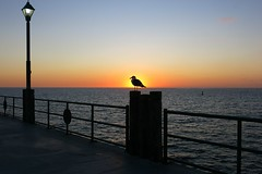 Redondo, .20/4 (Basic LA) Tags: redondobeach redondobeachpier kingsharbor la losangeles southbay socal california pier ocean gull sunset