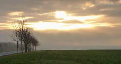 Vielversprechend...... (isajachevalier) Tags: sächsischeschweiz elbsandsteingebirge landschaft licht sonnenaufgang bäume sachsen panasonicdmcfz150