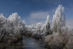 Con los ojos abiertos (anpegom) Tags: cencellada invierno rio elduero olivares valladolid castillayleón españa spain arbol chopo