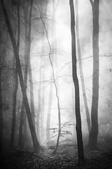 magisch (Karsten Höhne) Tags: textur bäume wald monochrom mystik