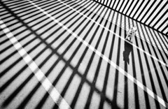Uno no se conoce a sí mismo hasta que atrapa el reflejo de otros ojos que no sean humanos. (Elena m.d. 12.8 M views.) Tags: nikon d7500 tokina1116 2020 lineas shadows tula dog minimalismo contraluz street urban