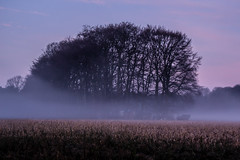 Foggy Morning (Markus Branse) Tags: foggymorning dülmen germany foggy morning nebel nebelstimmung fog fogg morgen morining deutschland duitsland niemcy sonnenaufgang sunrise bäum bäume trees tree rural countryside himmel sky wetter weather weer meteo wolken wolke clolud cloud clouds landschaft landscape winter country