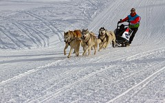 La joie...C'est le début de la course. (The joy... It's the beginning of the race) (Larch) Tags: lagrandeodyssée grandeodyssée leprazdelys montagne mountain alps alpes neige snow traces attelage chien dog sled sleddog hautesavoie france pente slope joie joy action sport team équipe musher tracesdeski skitraces début beginning moreauxadrien