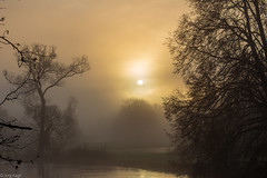 morgens am Fluss (Jörg Kage) Tags: deutschland germany saarland baum bäume tree trees sonne sun sonnenaufgang sunrise nebel misty fog fluss river natur nature landschaft landscape canon canonlens canoneos700d eos700d