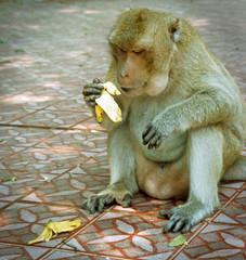 Gourmet (TablinumCarlson) Tags: asia asien südostasien southeastasia thai thailand siam leica c1 leicac1 dia diapositive scan film analog affe ape tier animal banana banane ost essen meal huahin amphoehuahin amphoe hua hin prachuap khiri khan hbf bahnhof enjoyyourmeal mahlzeit makake zentralthailand gourmet vignette