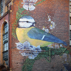 Blue Tit (Andrew Gustar) Tags: 120picturesin2020 manchester mural