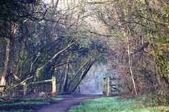 IMG_0316 edit (WildLife2020) Tags: woodland wildlife walks canon