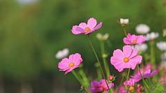 C'è un modo per risolvere l'arroganza (guandoandelei) Tags: lachiesadidioonnipotente lodeadio lavocedidio laparoladidio vangelo testimonianza dioonnipotente spiritosanto amoredidio fiori cielo