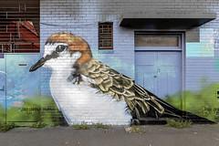 Dvate Newport 2020-01-18 (5D4_9514) (ajhaysom) Tags: dvate newport redcappedplover streetart graffiti melbourne australia canoneos5dmkiv canon1635l