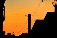 Envol crépusculaire (Tonton Gilles) Tags: alençon normandie rue saint blaise ombres chinoises oiseaux coucher de soleil orangé paysage urbain graphisme
