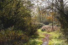 Photo of Autumn Path
