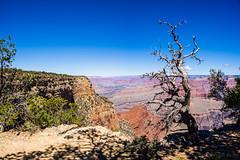 Grand Canyon (grand Yann) Tags: grandcanyon amerique usa arizona america