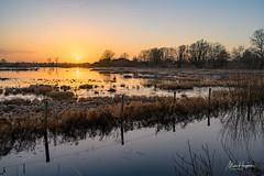 Sundown (Marc Haegeman Photography) Tags: bourgoyenossemeersen gent ghent belgium flanders vlaanderen oostvlaanderen marchaegemanphotography natuurpunt naturereserve wetlands meersen landscapephotographybymarchaegeman nikonz7 mirrorless natuur tegenlicht evening winter belgië