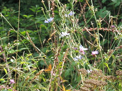 DSCN1616 (Gianluigi Roda / Photographer) Tags: summer august 2013 apennines prati fiori farfalle flora fauna meadows flowers wildflowers butterflies