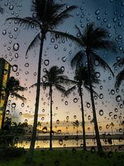 Waikiki Beach (pete4ducks) Tags: waikiki hawaii oahu sunrise trees water 2019 travel vacation