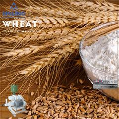 Wheat and Semolina Mill (molinosocial) Tags: complex food city factory quality engineering design research development concept turkey foodmachinery semolina rollermill seperator intensive dampener wheat barley oat rye molino turnkey turn key mill setup plant