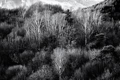 Spectra (drugodragodiego) Tags: soltocollina bergamo lombardia italy landscape paesaggio nature trees blackandwhite blackwhite bw biancoenero pentax pentaxk1 k1 pentax100mmmacro pentaxdfamacro100mm hddarearconverter14xav