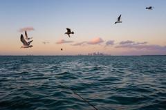 Miami, Fl, USA. December 2019 (Victor M. Perez) Tags: leicaxu leica landscape atsea fishing streetphotography birds sunset miami biscaynebay atlantic florida
