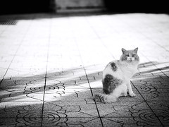 GFX2899 - Anakin (Diego Rosato) Tags: anakin giardino garden stray randagio animale animal pet fuji gfx50r fujinon gf110mm bianconero blackwhite rawtherapee